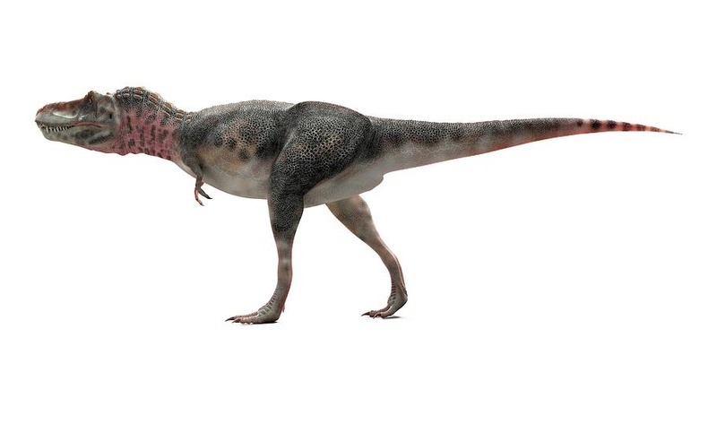 "Тарбозавр - ""Тираннозаврын хамаатан"" (Tarbosaurus)"