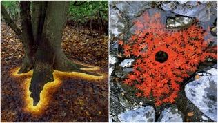 """""""Байгалиар зураг зурдаг"""" Шотланд залуугийн гайхалтай бүтээлүүд"""