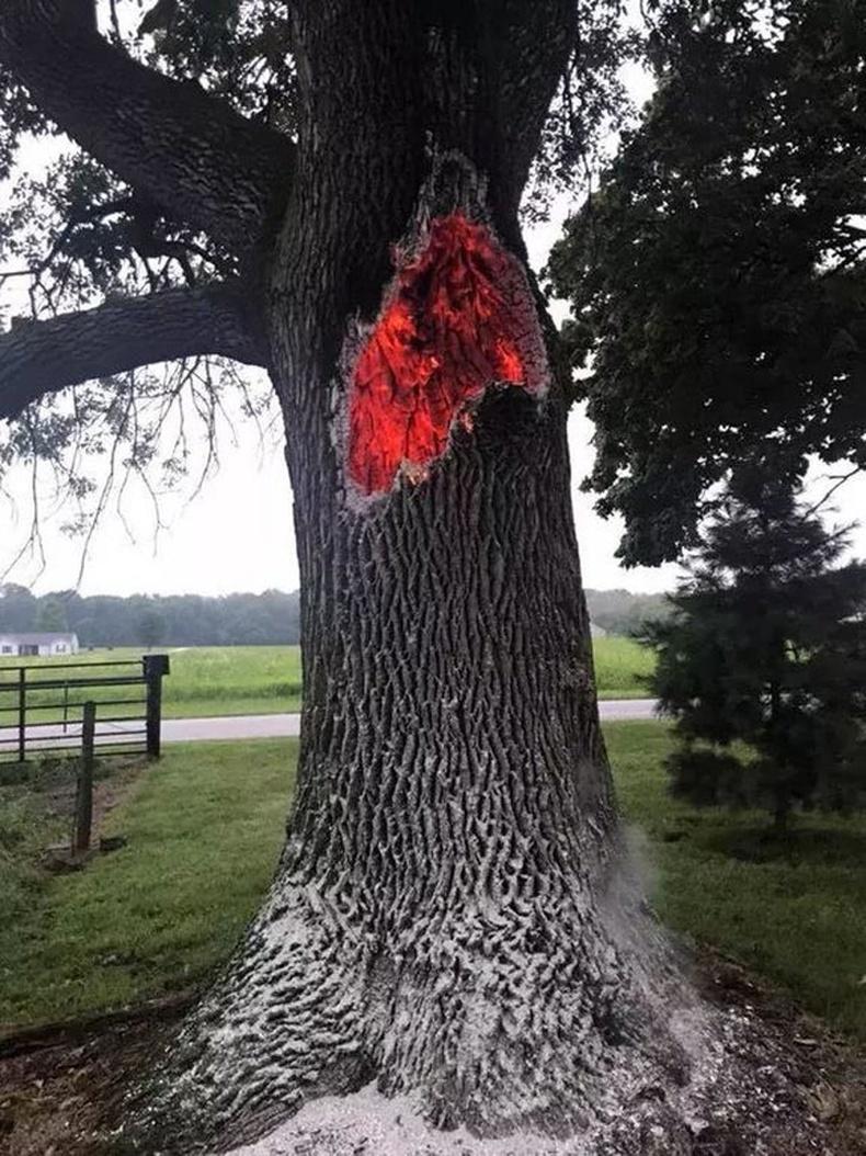 Аянганд цохиулаад дотроосоо шатаж буй мод