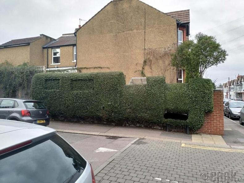 Галт тэрэг хэлбэртэй мод