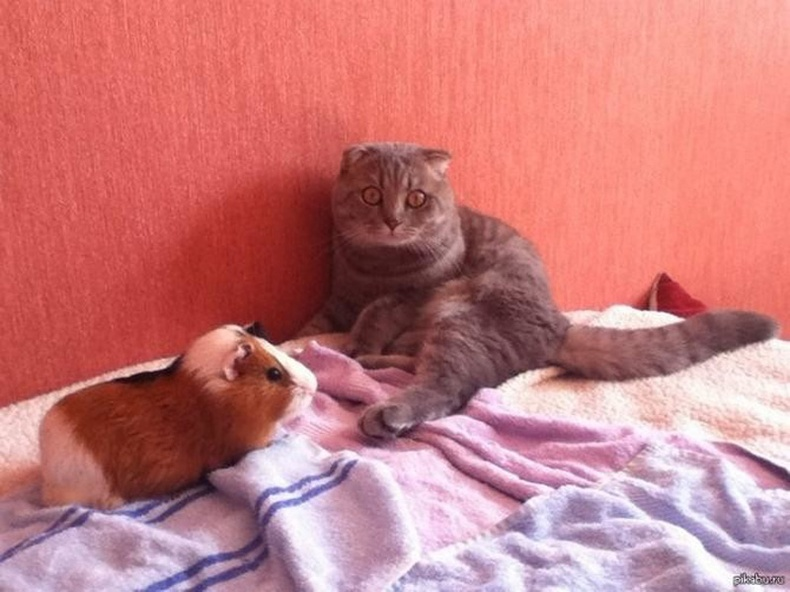 """""""Усан гахайтай болсны дараа муурны маань хариу үйлдэл"""""""