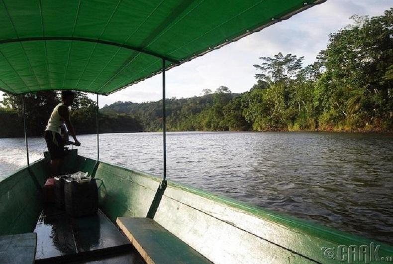 Амазон мөрөн эргээсээ халина