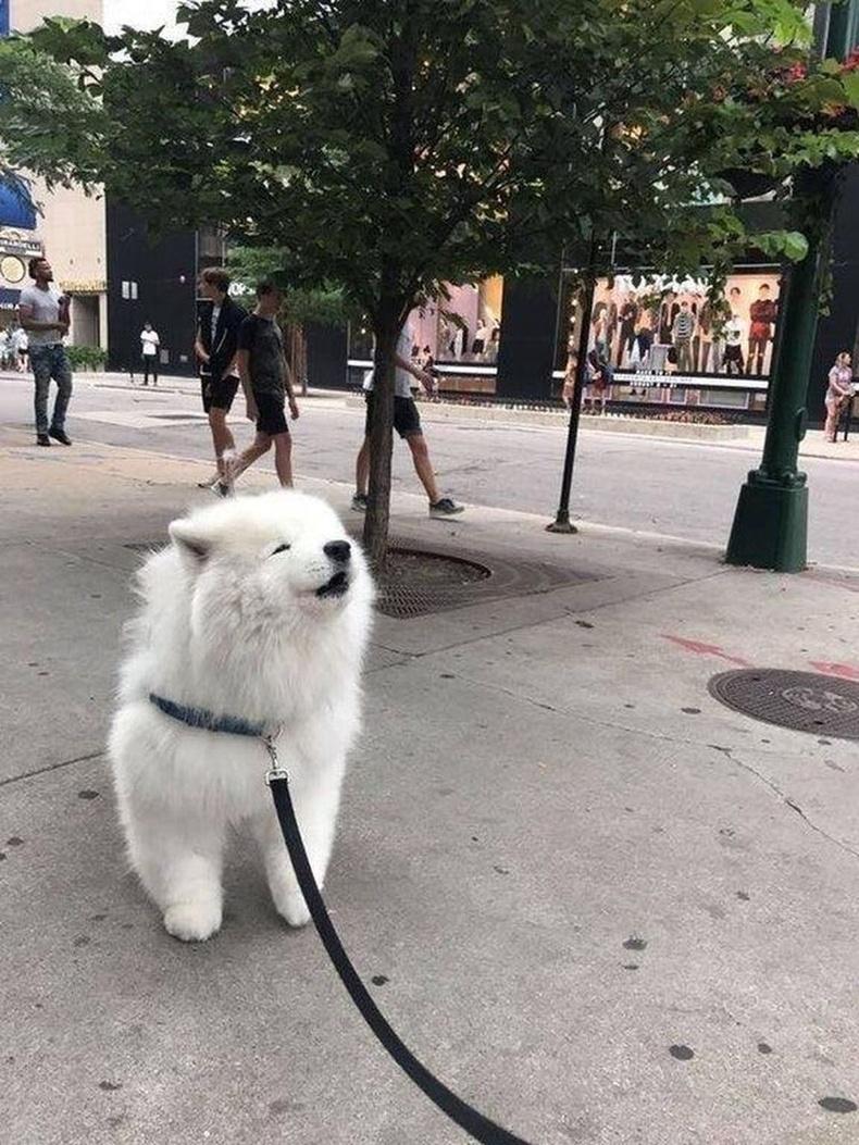 """Гудамжаар зүгээр явж чаддаггүй """"од"""""""