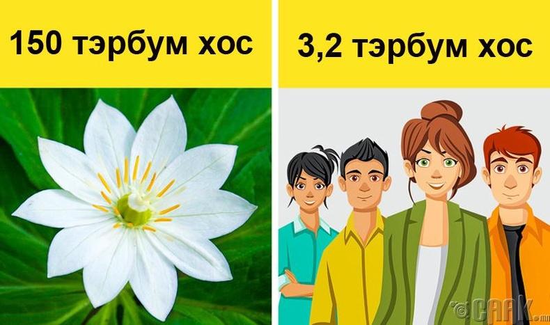 Ургамалын ген хүнийхээс илүү нарийн төвөгтэй