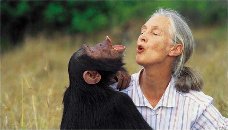 Амьтны эрхий төлөө тэмцэгч Жейн Гоодалл /Jane Goodall/