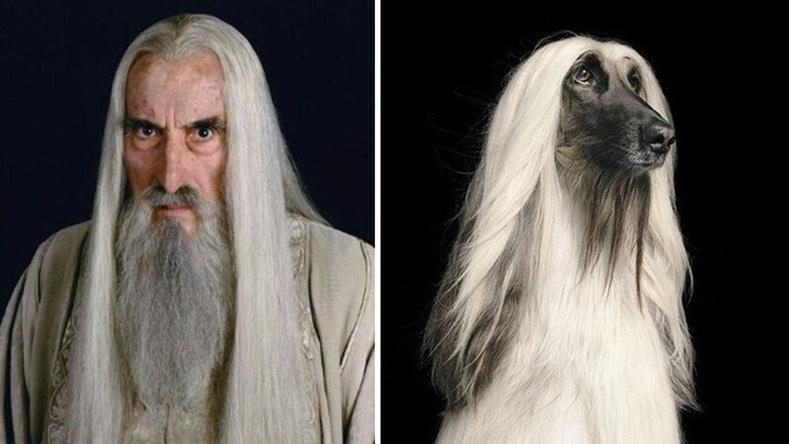 """""""Бөгжний эзэн"""" киноны дүрүүд хэрэв нохой байсан бол..."""