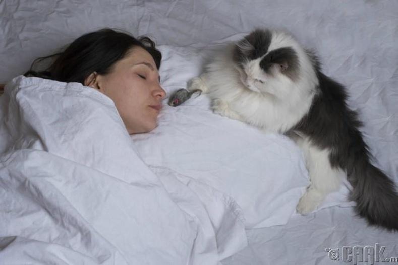 Гэрийн тэжээвэр амьтадтайгаа хамт унтдаг