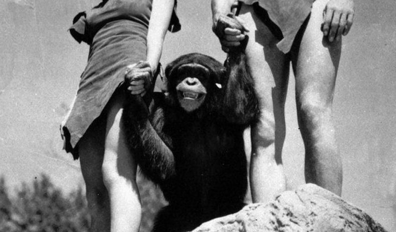 Дэлхийн 1-р дайны үед шимпанзе агнаж идсэн цэргүүдээс ДОХ өвчин анх тархсан уу?