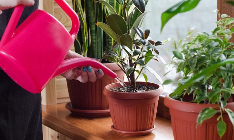 Агаарыг хамгийн сайн цэвэрлэж, хоргүйжүүлдэг тасалгааны ургамлууд
