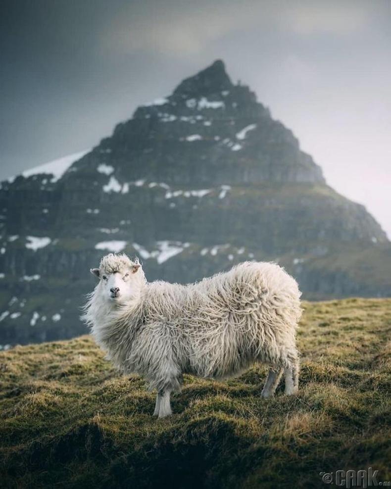 Альпийн нуруу - Гэрэл зурагчин Себистиан Шайхл (Sebastian Scheichl)