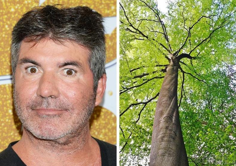 Саймон Коуэл (Simon Cowell) модонд авирах зуршилтай