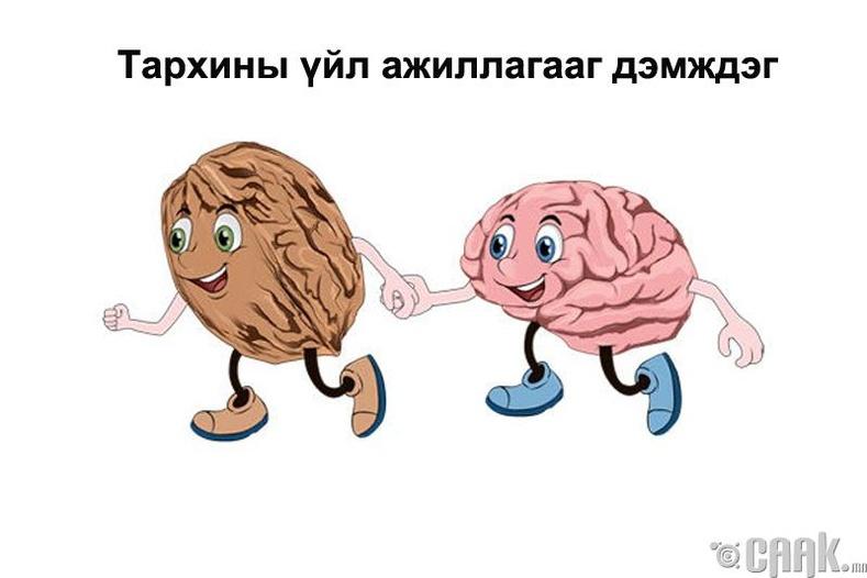Тархины үйл ажиллагааг дэмждэг