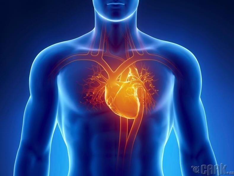 Зүрх судасны үйл ажиллагаа