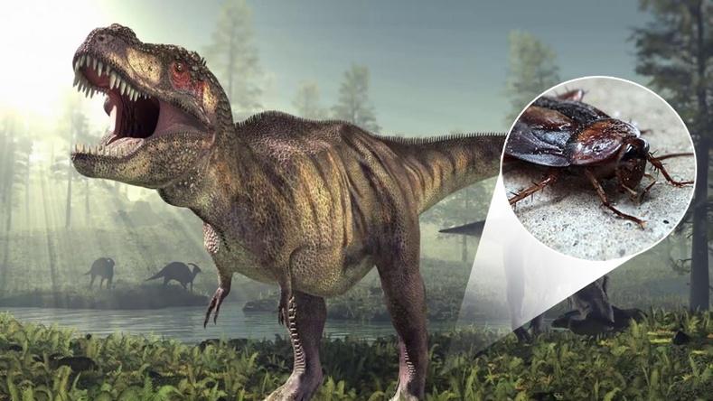 Динозавруудтай хамт амьдарч байсан өнөө үеийн амьтад