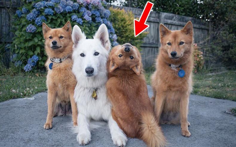 Муурнуудтай хамт өссөн нохойны хөгжилтэй араншинг эзэн нь хуваалцжээ