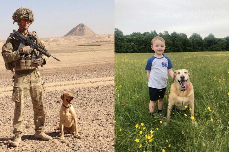 Армийн нохой 7 жилийн дараа гэртээ ирсэн нь
