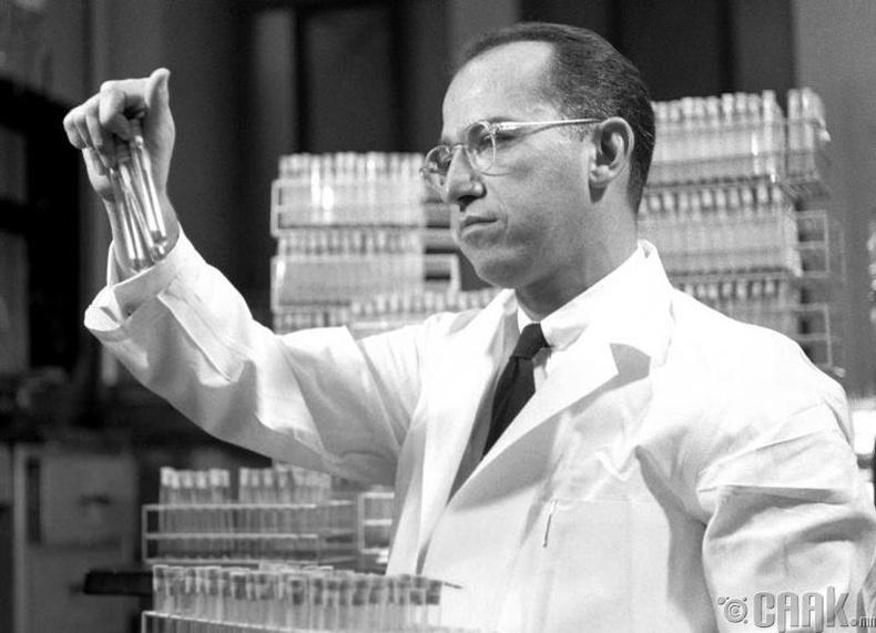 Жонас Салк- Халдварт саа өвчний эсрэг вакцин өөр дээрээ туршсан