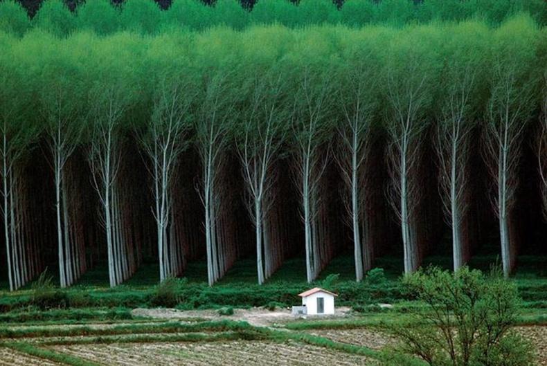 Хүний бүтээсэн ой