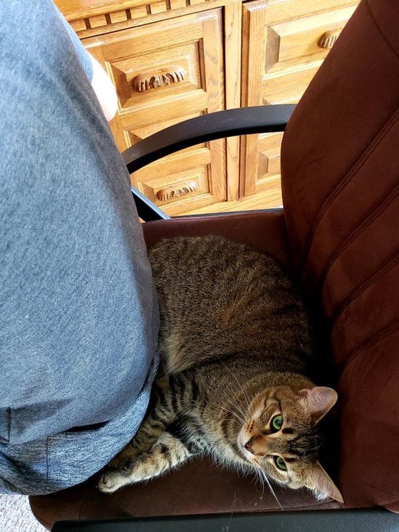 """Муур босс л сууж байвал """"эзэн"""" нэртэй боол хаана ч суусан яахав дээ"""