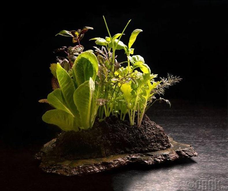 Төрөл бүрийн ногоон ургамал бүхий салат