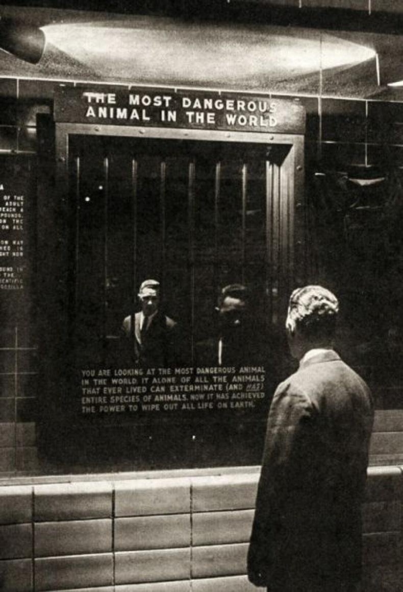 """1963 онд Бронкс амьтны хүрээлэн """"Дэлхийн хамгийн аюултай амьтан"""" нэртэй үзмэр байгуулжээ. Харин тус үзмэр нь толь байв."""