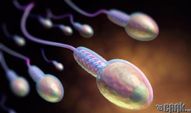 Зөв хоолны дэглэм=Чанартай сперм