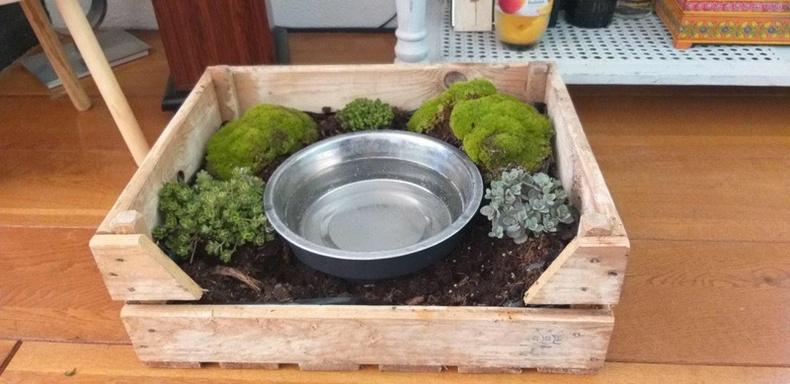 Нохой нь ус уух үедээ байнга гадуур нь асгадаг байжээ. Үүний тусламжтайгаар эзэн нь бяцхан цэцэрлэгтэй болсон байна.