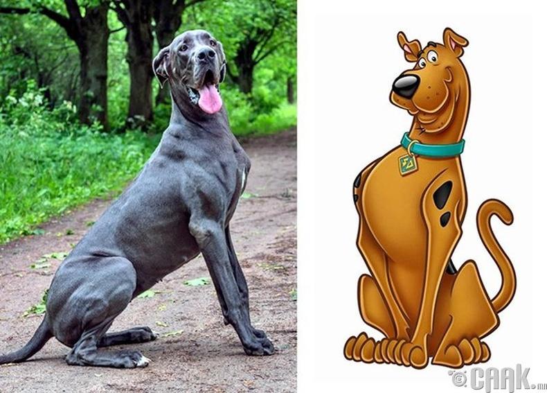 """""""Скуби-Ду"""" ямар үүлдрийн нохой вэ?"""