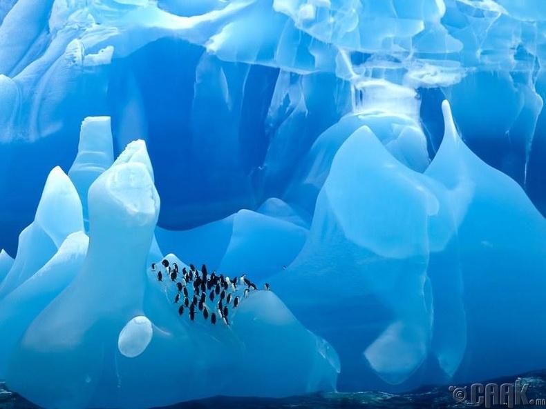 Скотийн тэнгисийн цэнхэр мөсөн уулан дээрх оцон шувуунууд