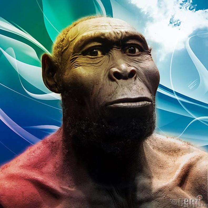 Хомо Рудолфенсис (Homo Rudolfensis)