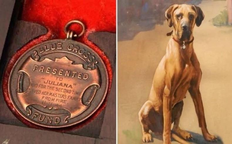 """Дэлхийн 2-р дайны үед тэсрэх бөмбөг дээр шээж салгасан Герман нохой Жулиана """"Цэнхэр загалмай""""-н шагнал хүртэж байжээ"""