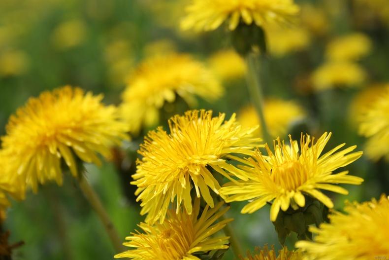 Багваахай цэцэг