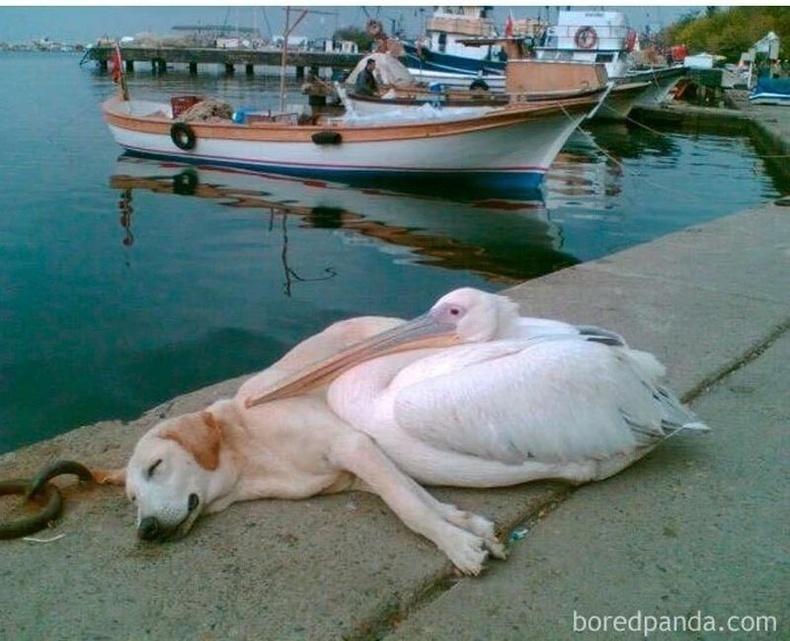 Гудамжны нохой, хотон шувуу хоёр хэзээний сайн найзууд байсан гэнэ. Харин сүүлд нохойг оршин суугчдын нэг нь авч тэжээж эхэлсэн ч өдөр бүр найзтай нь уулзуулахаар авчирдаг болжээ.