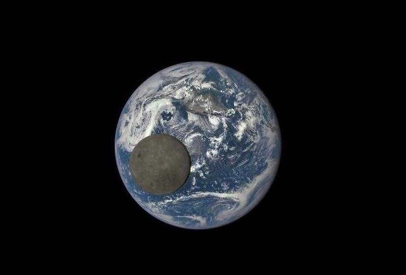 Сарыг өөр өнцгөөс харуулсан ховорхон зураг
