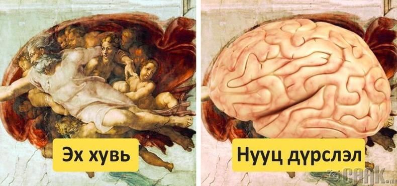 Микеланжелогийн уран зураг дахь анатоми