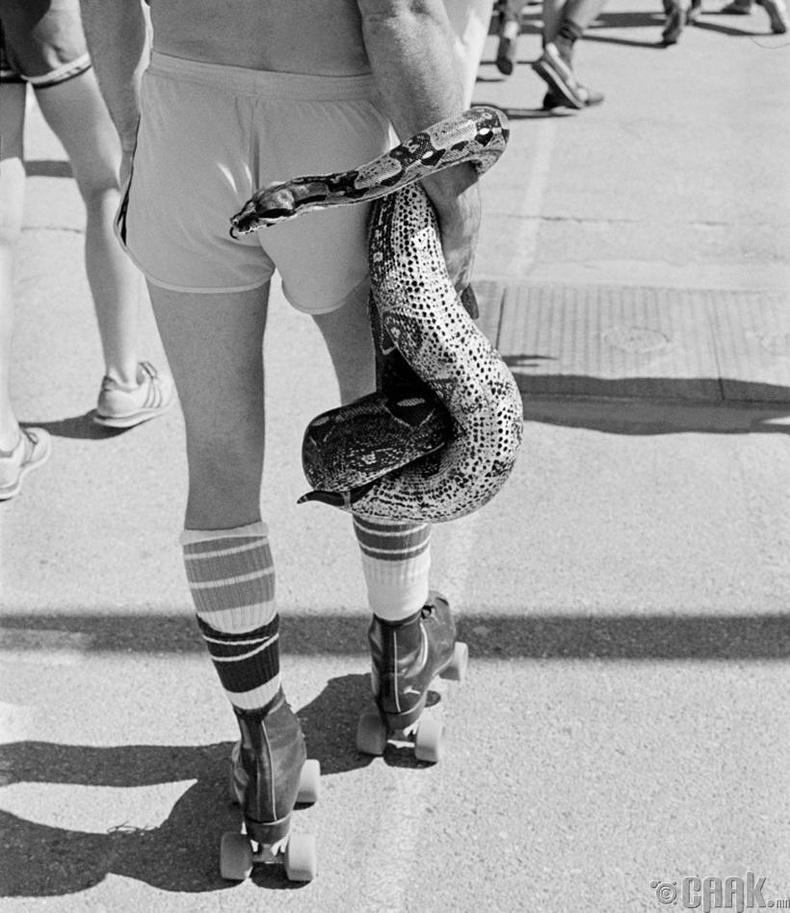 Калифорнид болсон фестивалын үеэр, 1980 он