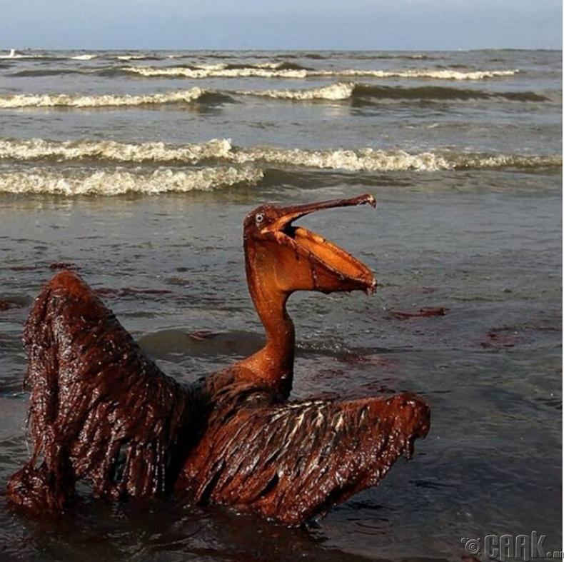 Газрын тосонд орсон шувуу