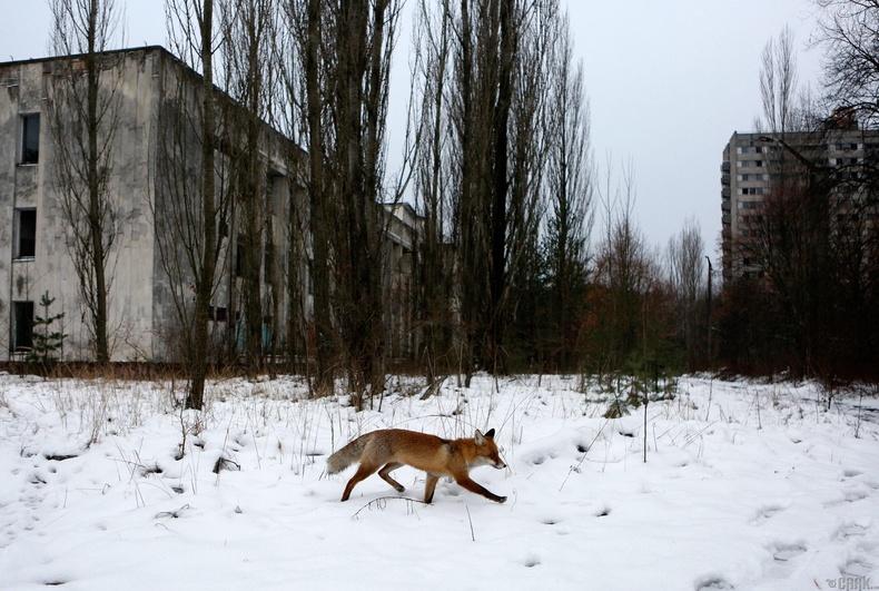Чернобыль, ОХУ