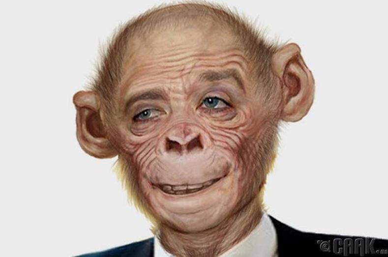 Эмэгтэй хүнд оронгутан сармагчингийн эр бэлгийн эс суулгах