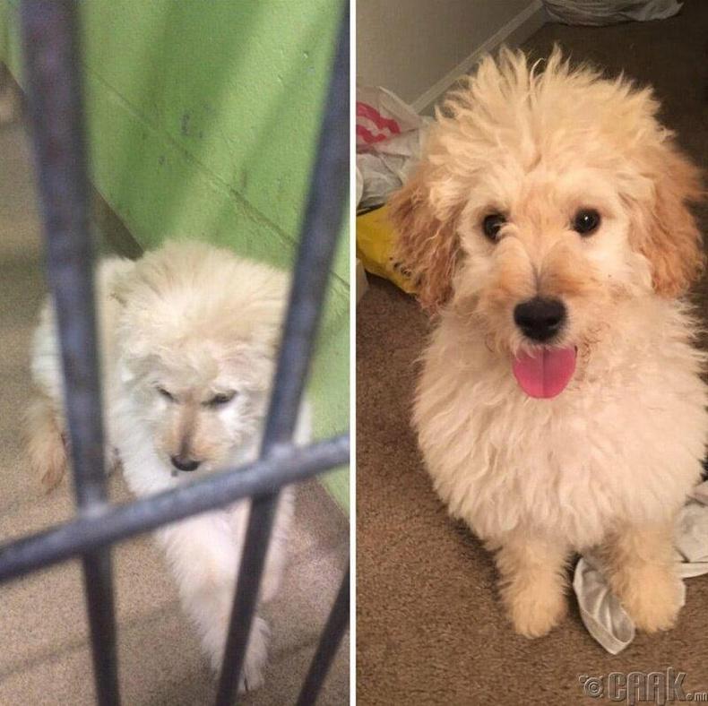 Гуниж гутарсан нохойноос Альберт Эйнштейн шиг цоглог, сэгсэр нохой болсон нь