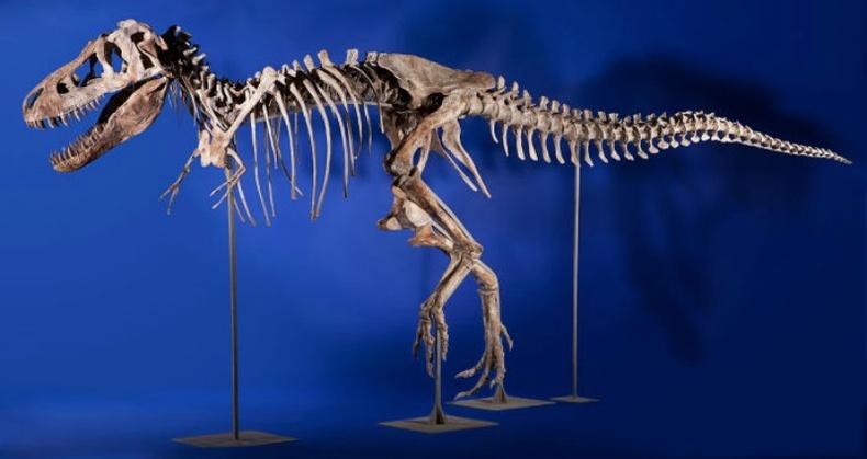 Тираннозавр үлэг гүрвэлийн яс