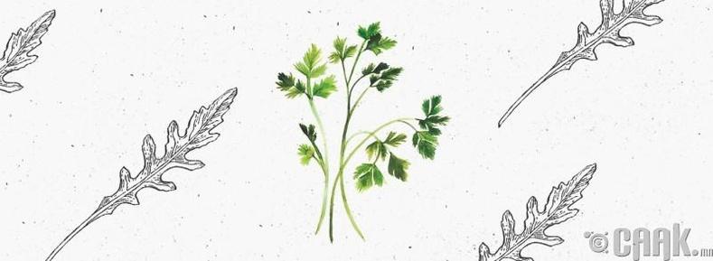 Ногоон навчит ургамал