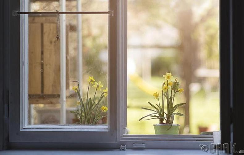 Цонх болон хаалгаа үргэлж нээлттэй орхих