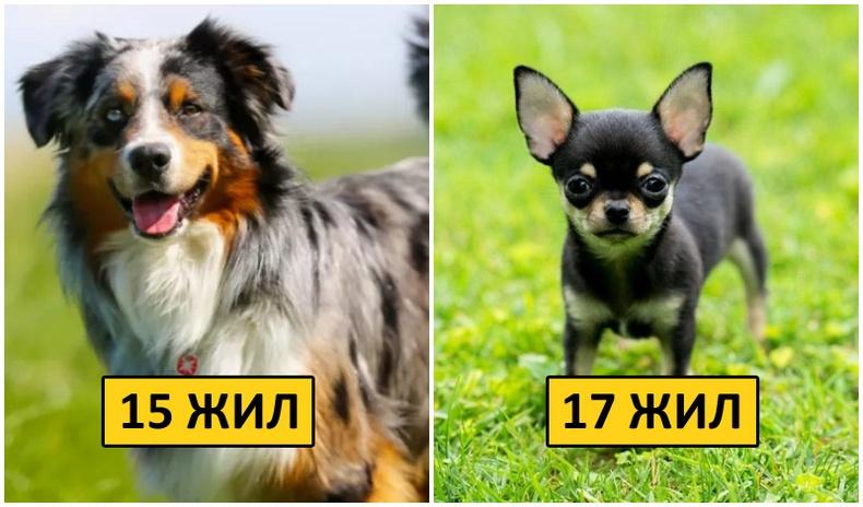 Хамгийн урт насалдаг 10 нохойны үүлдэр
