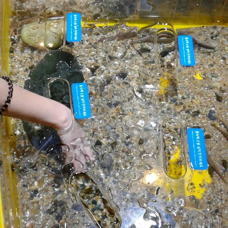 Хүмүүсийг алжаалаа тайлахад зориулсан аквариум