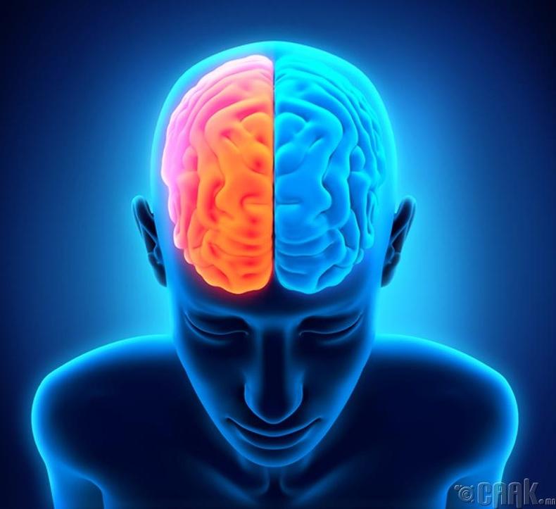 Тархины баруун, зүүн хэсгүүд өөр өөрийн үүрэгтэй