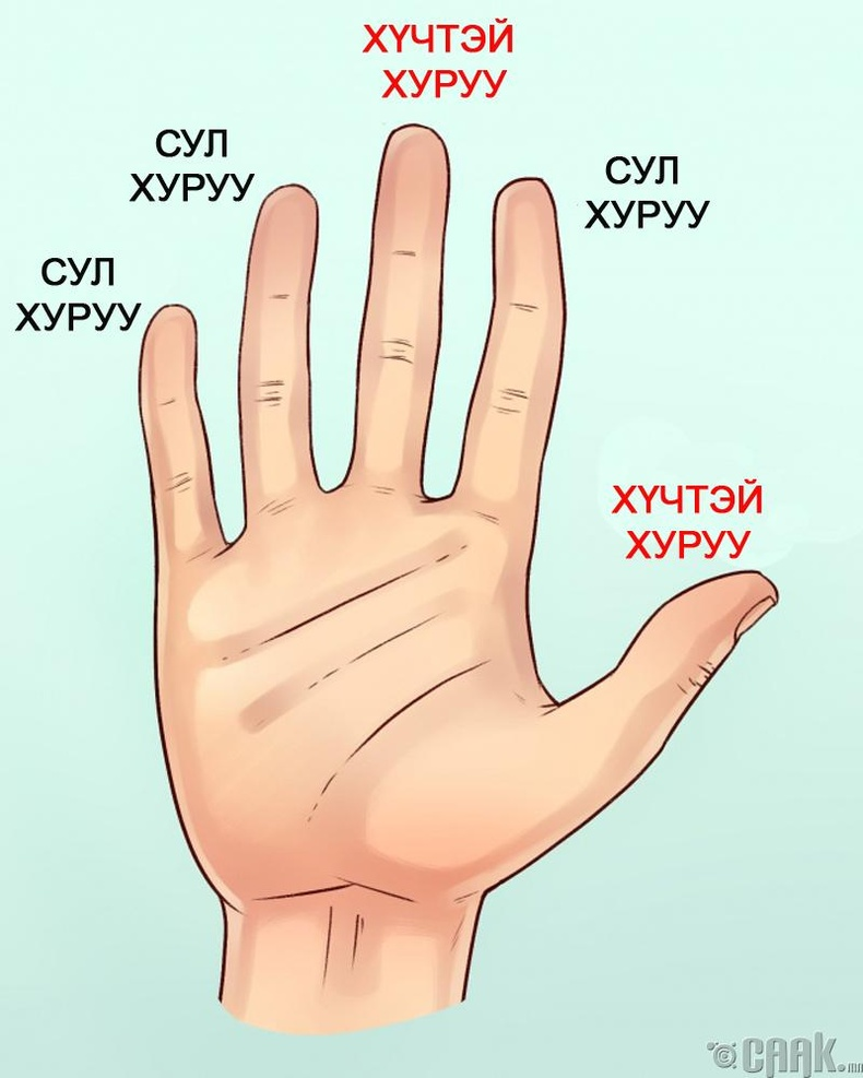 Хүчтэй болон сул хуруугаа тодорхойлох
