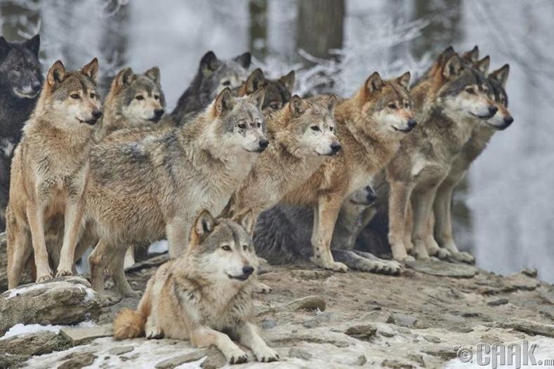 Дэлхийн I дайныг хэсэг хугацаанд зогсоосон чононууд