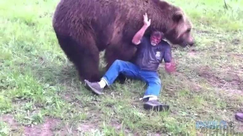 Зэрлэг амьтны дайралт