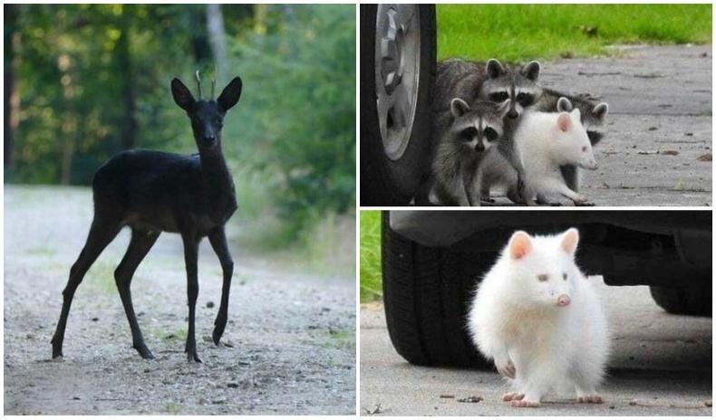 Байгалаас заяасан гайхшрал төрүүлэм ховорхон зүстэй амьтад